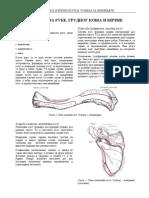Anatomija-ruke-grudnog-koša-i-kičme