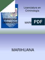 Marihuana.ppt