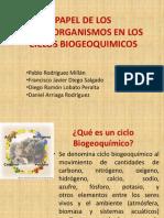 Papel de Los Microorganismos en Los Ciclos Biogeoquimicos