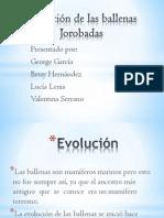 Evolución de las ballenas Jorobadas