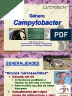 Campylobacter 2013