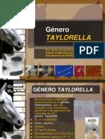 Genero Taylorella Enero 2013