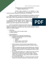 practica 2 micro.docx