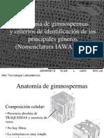 anatomía de gimnospermas