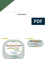 005 RNA Splicing (Processamento).pdf