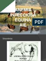 Anemia Infecciosa