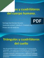 Triángulos y cuadriláteros del cuerpo humano (1)