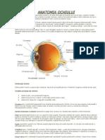 Anatomia Ochiului