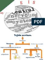 Sistema Nervioso Central2