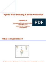 Hybrid_Rice_Breeding_&_Seed_Production.ppt