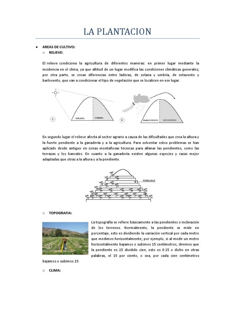 La Plantacion 1