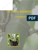 bamboo Propagation Manual
