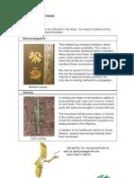 Tropical Bamboos - Propagation Manual