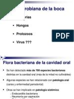 TEMA 38 DIAPOSITIVAS Flora y Mec Defensa Boca
