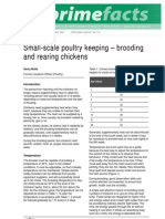 Small Scale Brooding Rearing Chickens