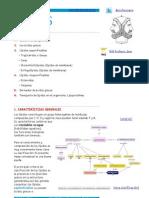 LÍPIDOS APUNTES.pdf