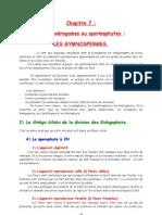 10BV CHAP7 Les Gymnospermes