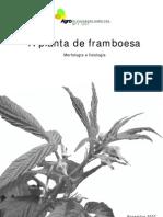 Framboesa Morfologia e Fisiologia