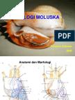 materi-6-molusca2
