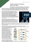 Lorecalle.it-scoperta Russa Sul DNA Le Parole e Le Frequenze Influenzano e Riprogrammano Il DNA