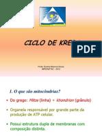 O CICLO DO ÁCIDO CÍTRICO 29-04-11