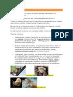 Moluscos Resumen