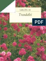 Capitolul 10 - Trandafiri