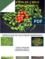MESA 2 6 P NEGRAS Chile Piquin Hidroponico Piedras Negras Coahuila (1)
