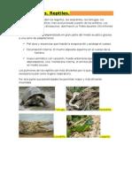 Reptiles.Resumen.