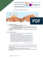 Ficha Formativa Nc2ba1 Vulcanologia e Sismologia
