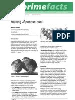 Raising Japanese Quail