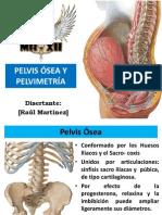 Pelvis Ósea y Pelvimetría (Raúl Martinez).pdf