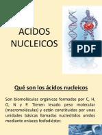 Acidos Nucleicos Biologia II