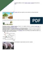 Termos de Biologia, Ecologia