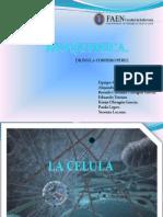 Bioquimica La Celula
