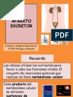 p344APARATOEXCRETOR