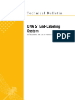 Dna 5 End-labeling System Protocol