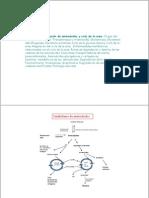 TEMA 17. Degradación de aminoácidos y ciclo de la urea