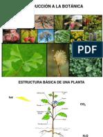 8va Clase Intro-Botanica