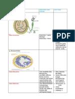 morfologi arbovirus