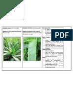 Herbario Aloe Vera