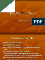 Regnul Fungi