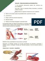Contração muscular - sistema cardiovascular.pdf