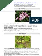 Top 10 Cele Mai Otravitoare Plante 6 Toxice-1