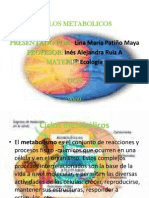 ciclosmetabolicos-101031105423-phpapp01