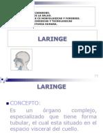 Copia de Larine y Laringo Faringe[1]