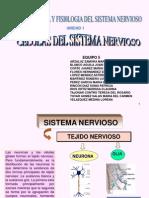 u1 Celulas Del Sistema Nervioso 1234561993335815 2