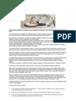 Bahaya kencing tikus