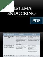 10. Sistema Endocrino SEM