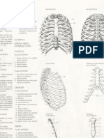 Referência Anatomia Desenho